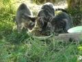 phoca_thumb_l_02_2011-09-25_kittens