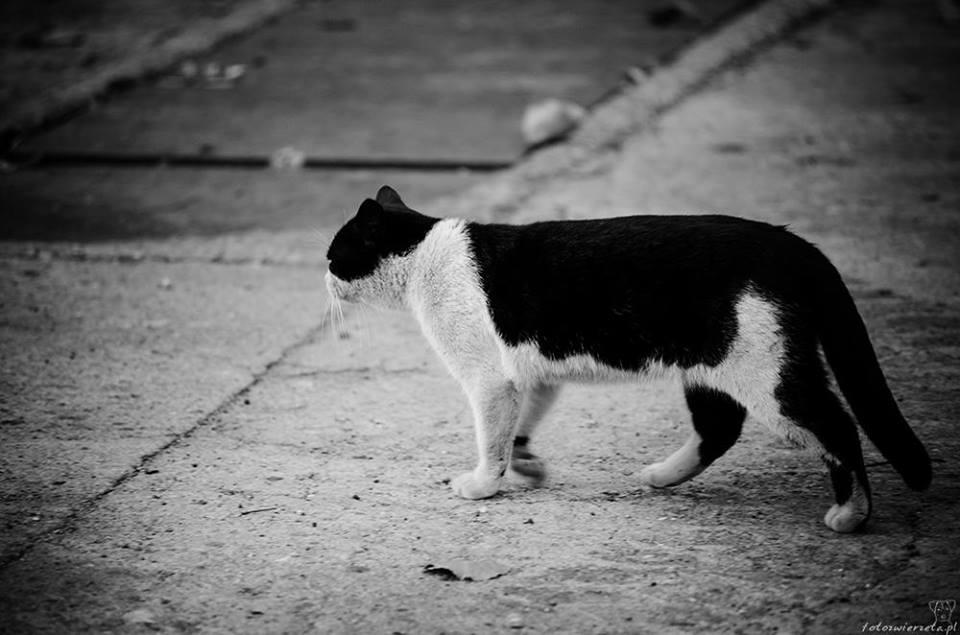 Stocznia Nauta - koty do adopcji zdjęcie nr 11
