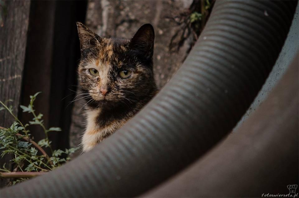 Stocznia Nauta - koty do adopcji zdjęcie nr 12