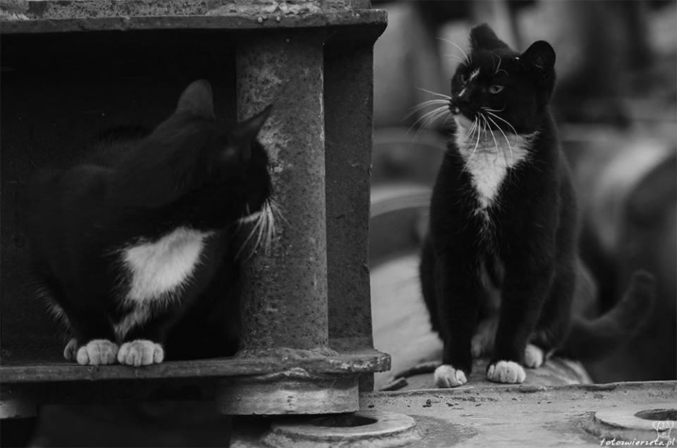 Stocznia Nauta - koty do adopcji zdjęcie nr 13