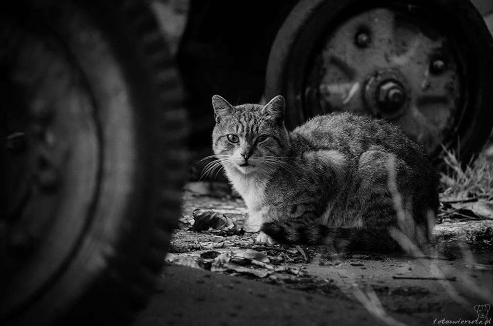 Stocznia Nauta - koty do adopcji zdjęcie nr 17