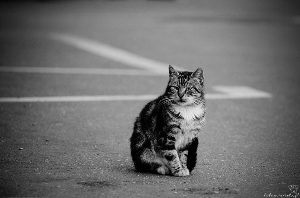 Stocznia Nauta - koty do adopcji zdjęcie nr 18