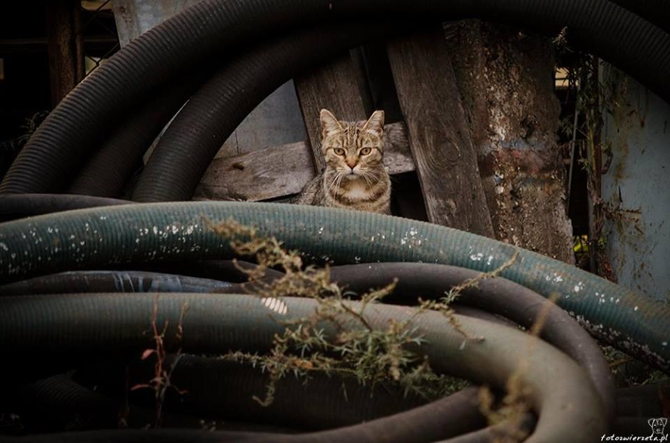 Stocznia Nauta - koty do adopcji zdjęcie nr 19