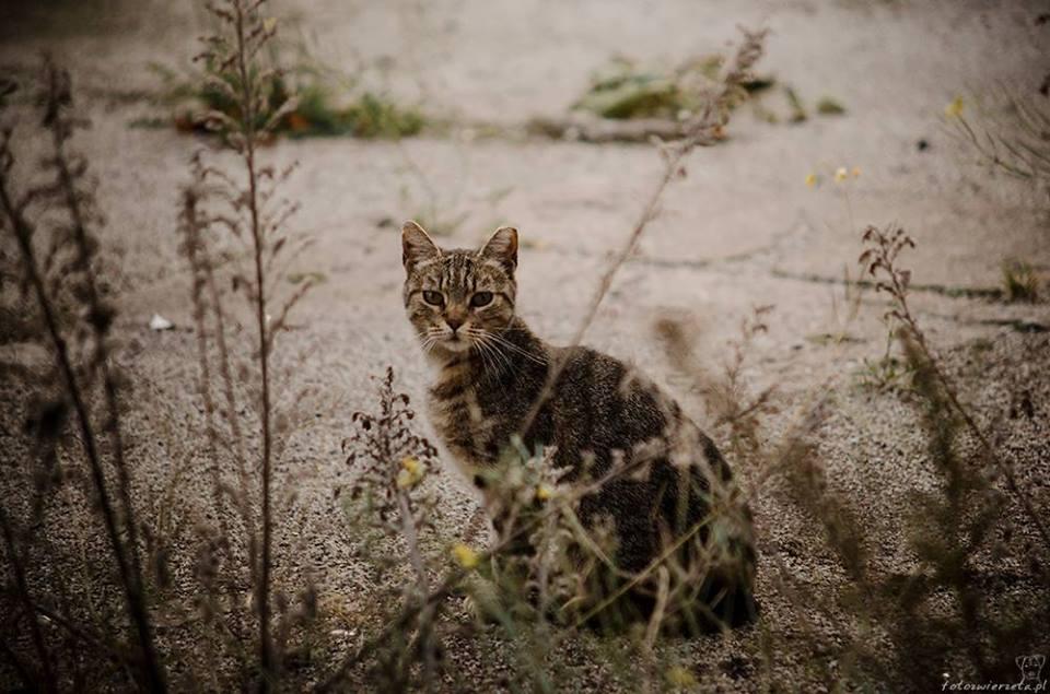 Stocznia Nauta - koty do adopcji zdjęcie nr 20