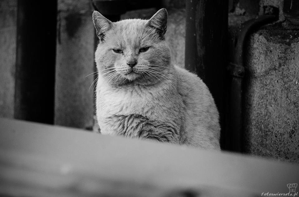 Stocznia Nauta - koty do adopcji zdjęcie nr 22