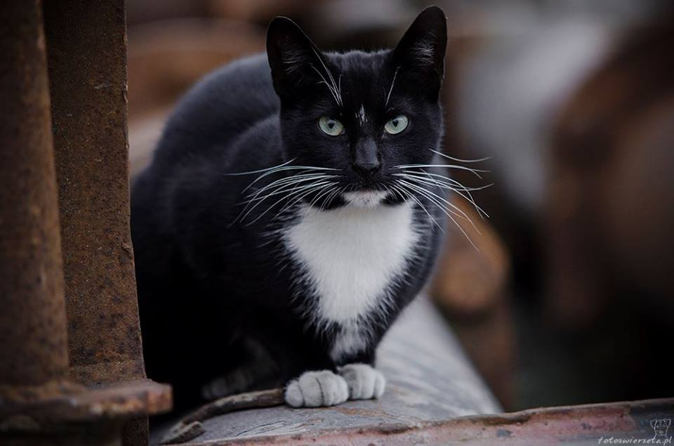 Stocznia Nauta - koty do adopcji zdjęcie nr 23