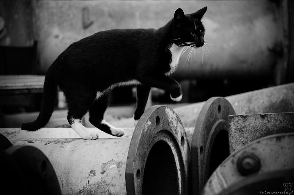 Stocznia Nauta - koty do adopcji zdjęcie nr 24