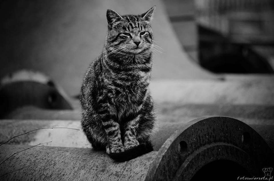 Stocznia Nauta - koty do adopcji zdjęcie nr 27