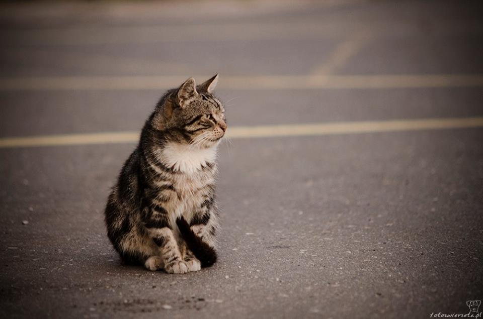 Stocznia Nauta - koty do adopcji zdjęcie nr 6