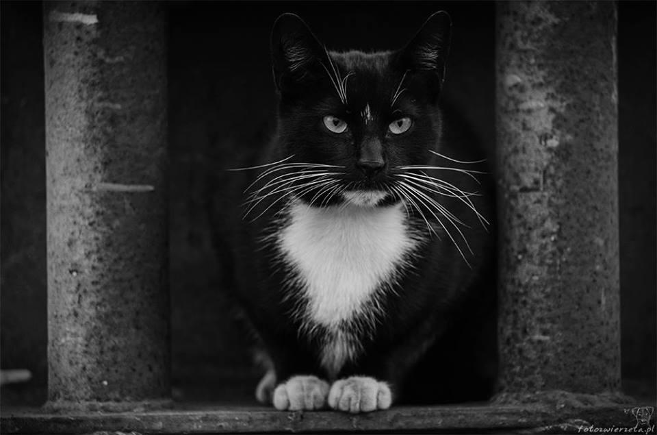 Stocznia Nauta - koty do adopcji zdjęcie nr 7