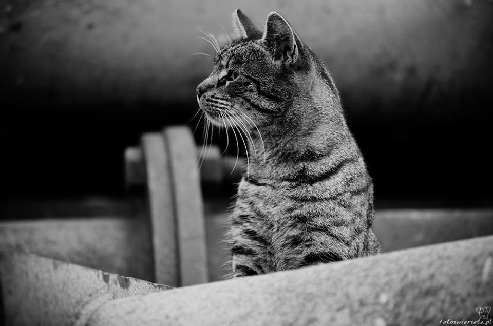 Stocznia Nauta - koty do adopcji zdjęcie nr 8