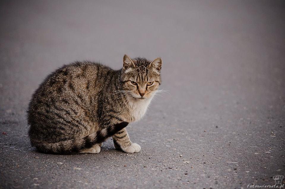 Stocznia Nauta - koty do adopcji zdjęcie nr 1