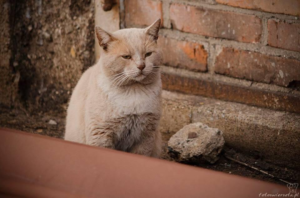 Stocznia Nauta - koty do adopcji zdjęcie nr 28