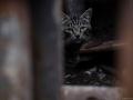 Stocznia Nauta - koty do adopcji zdjęcie nr 10