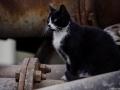 Stocznia Nauta - koty do adopcji zdjęcie nr 14