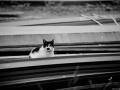 Stocznia Nauta - koty do adopcji zdjęcie nr 15
