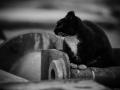 Stocznia Nauta - koty do adopcji zdjęcie nr 16