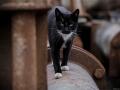 Stocznia Nauta - koty do adopcji zdjęcie nr 211