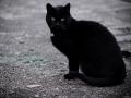 Stocznia Nauta - koty do adopcji zdjęcie nr 25