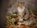 Stocznia Nauta - koty do adopcji zdjęcie nr 26