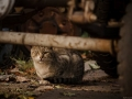 Stocznia Nauta - koty do adopcji zdjęcie nr 2