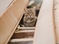 Stocznia Nauta - koty do adopcji zdjęcie nr 3
