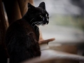 Stocznia Nauta - koty do adopcji zdjęcie nr 4