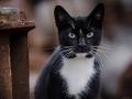 Stocznia Nauta - koty do adopcji zdjęcie nr 5