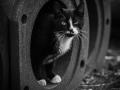 Stocznia Nauta - koty do adopcji zdjęcie nr 9