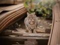 Stocznia Nauta - koty do adopcji zdjęcie nr 29