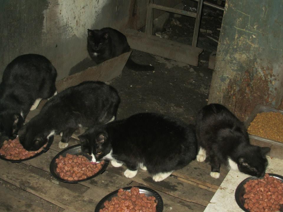 Koty w stoczni Gdynia zdjęcie nr 6