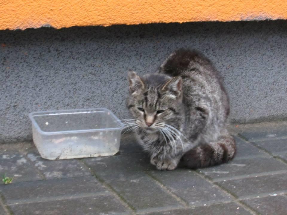 Koty w stoczni Gdynia zdjęcie nr 8