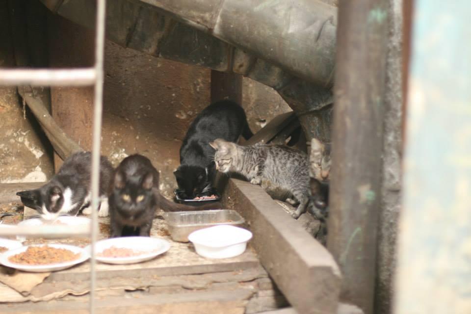Koty w stoczni Gdynia zdjęcie nr 1