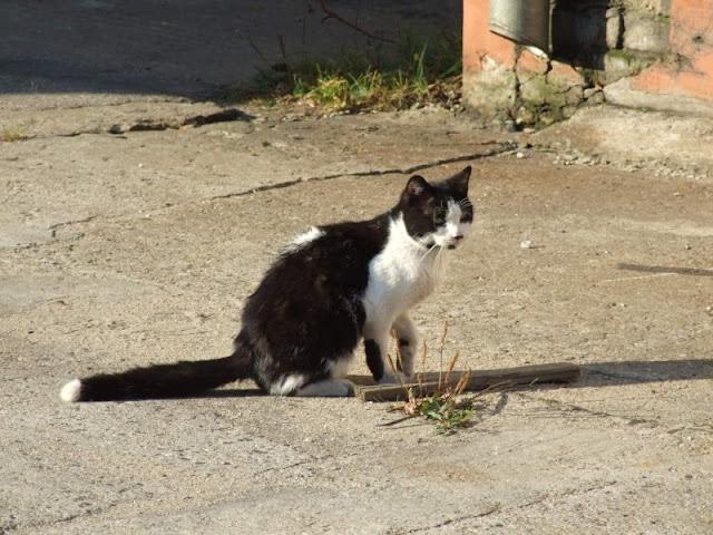 Koty w stoczni Gdynia zdjęcie nr 23