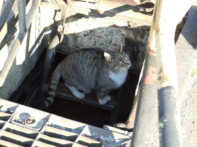 Koty w stoczni Gdynia zdjęcie nr 18