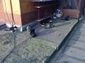 Koty w stoczni Gdynia zdjęcie nr 3