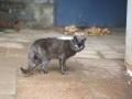 Koty w stoczni Gdynia zdjęcie nr 11