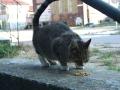 Koty w stoczni Gdynia zdjęcie nr 2