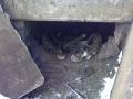 Koty w stoczni Gdynia zdjęcie nr 10