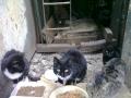 Koty w stoczni Gdynia zdjęcie nr 16