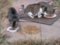 Koty w stoczni Gdynia zdjęcie nr 15