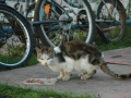 Koty w stoczni Gdynia zdjęcie nr 22