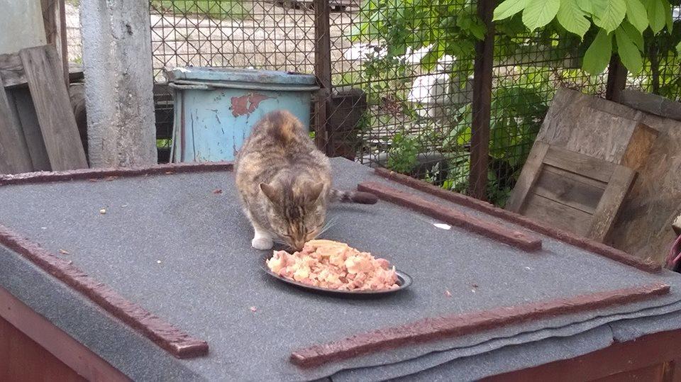 Koty Stocznia Nauta zdjęcie nr 1