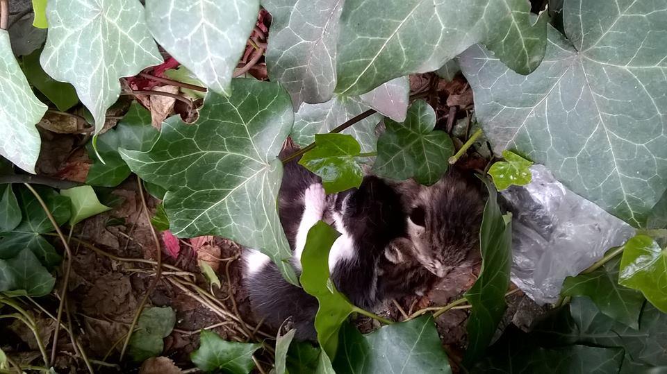 Koty Stocznia Nauta zdjęcie nr 3