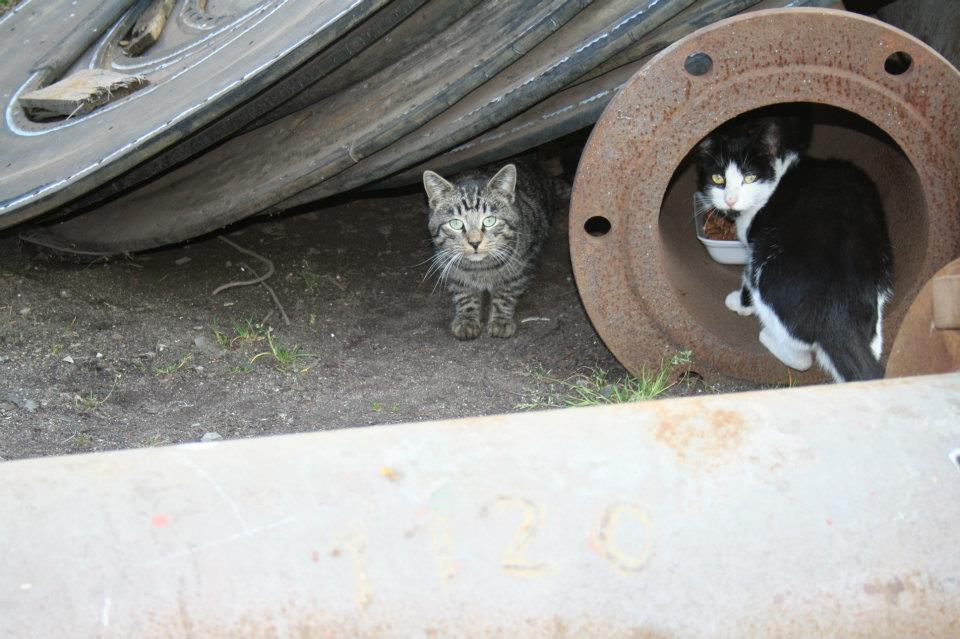 Koty Stocznia Nauta zdjęcie nr 4