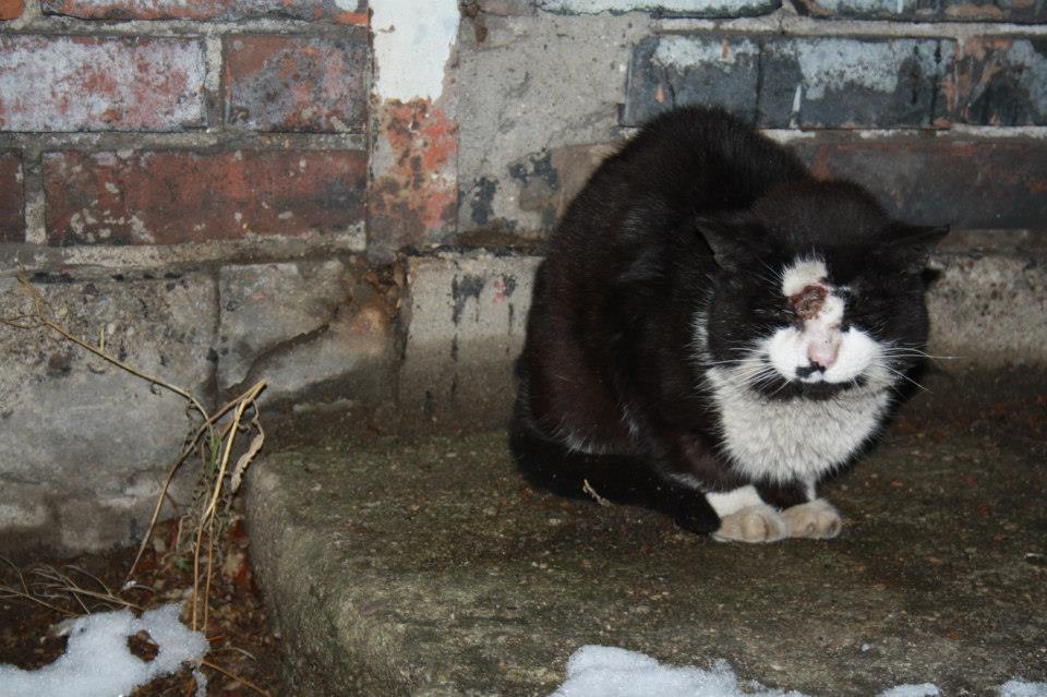 Koty Stocznia Nauta zdjęcie nr 8