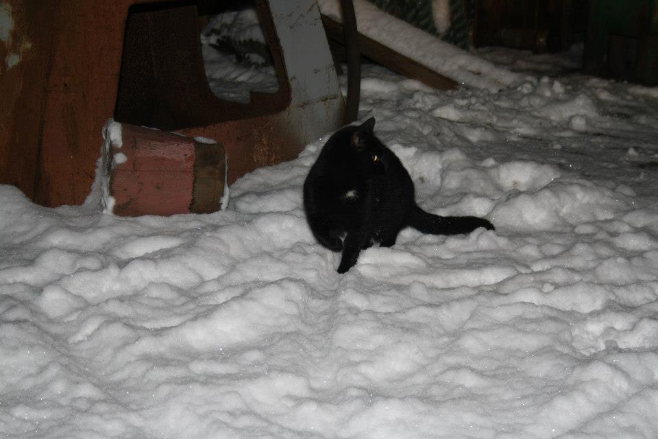 Koty Stocznia Nauta zdjęcie nr 13