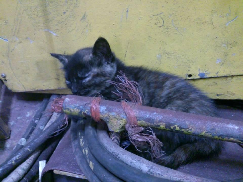 Koty Stocznia Nauta zdjęcie nr 17