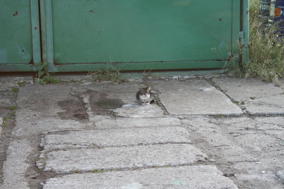 Koty Stocznia Nauta zdjęcie nr 6