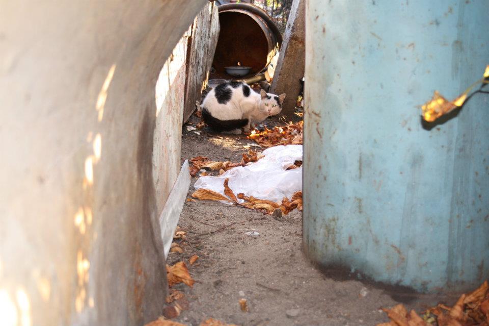 Koty Stocznia Nauta zdjęcie nr 10